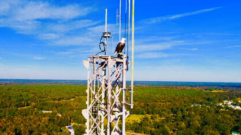 Deter Osprey from nesting on towers