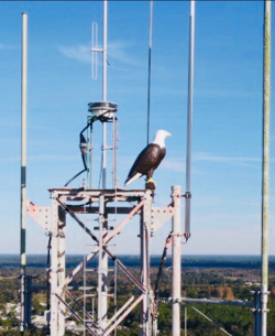 Osprey deterrent mounted on cell tower