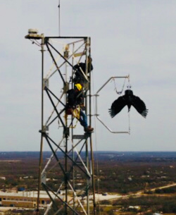 Vulture deterrent mounted on cell tower
