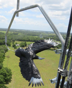Deter vultures from cell towers
