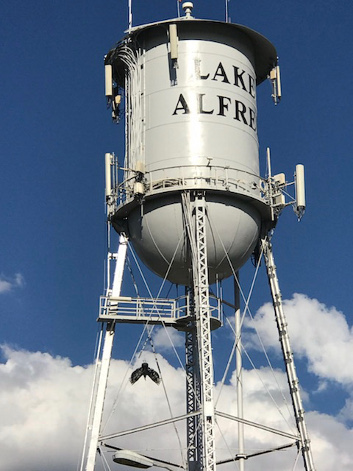 Vulture effigy to deter vultures on Water Towers