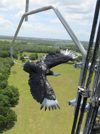 Vulture deterrent for cell towers and power transmission towers